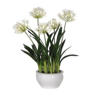 White Agapanthus Faux Plants in Cream Glazed Bowl