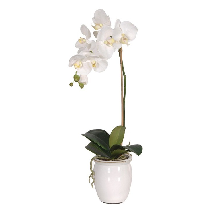 White Orchid Phalaenopsis Plant in Cream Glazed Pot