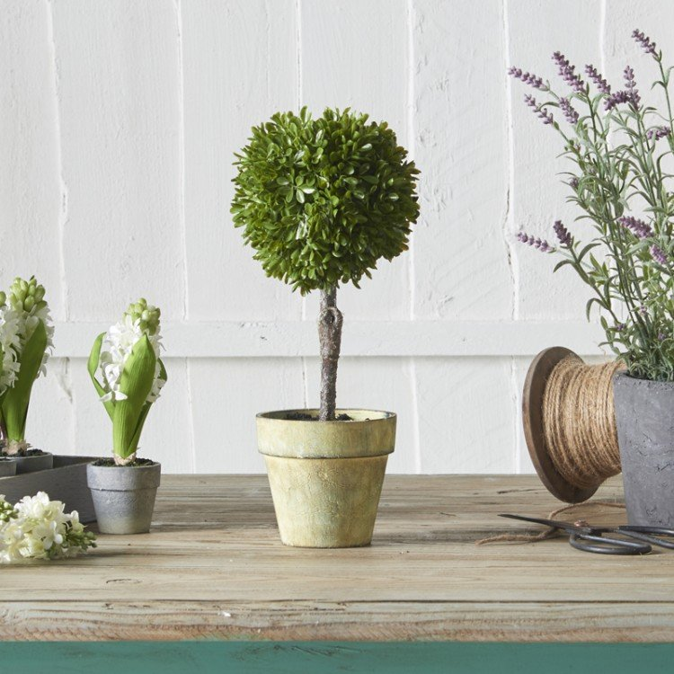 Green Miniature Boxwood Ball in Brown Pot